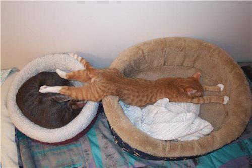 pisici somn (18)
