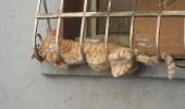 pisici somn (19)