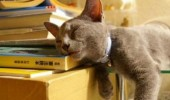 pisici somn (2)