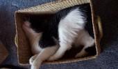 pisici somn (21)