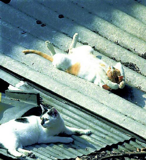 pisici somn (22)