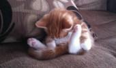 pisici somn (23)
