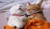 pisici somn (24)