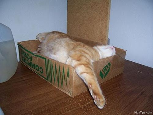 pisici somn (4)