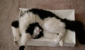 pisici somn (5)