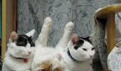 pisici somn (6)