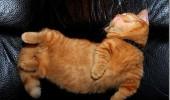 pisici somn (7)