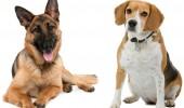sn-dogs-thumb-800xauto-3030
