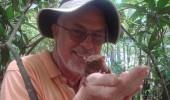 tarsier 2