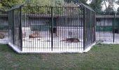 Mafia animalelor exotice loveste la Craiova! Administratorul, angajatii si veterinarul gredinei Zoo au facut disparuti trei pui de leu!