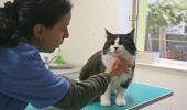 ALARMANT. Pisicile vă pot îmbolnăvi grav copilul