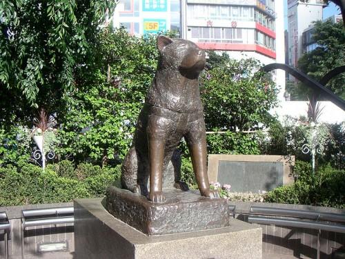 800px-Hachiko200505-2