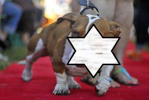 A fost desemnat cel mai urât câine din lume. Uite câți bani a CÂȘTIGAT la un concurs canin pentru acest lucru