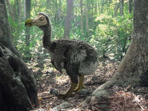 Extincții moderne! Animale pe care trebuia să le cunoaştem