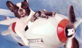 Vreţi să îl luaţi cu voi în avion? Iată ce condiţii trebuie să îndepliniţi!