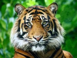 La Madrid va fi inaugurat un laborator zoo de ultimă generaţie