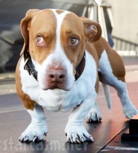 A fost desemnat cel mai urât câine din lume și a câștigat 1.500 de dolari