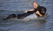 Un barbat a salvat de la inec un urs! Imagini incredibile