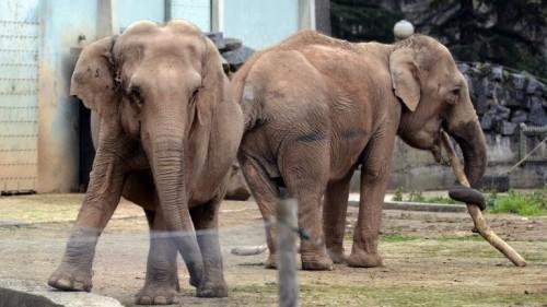 Elefanţii Baby şi Nepal, scăpaţi de eutanasiere, au ajuns în Monaco