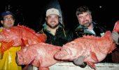 Un peşte în vârstă de 200 de ani, prins de un pescar în Alaska