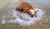 Fereşte-i de caniculă! Temperaturile de vară îi pot ucide în câteva clipe!