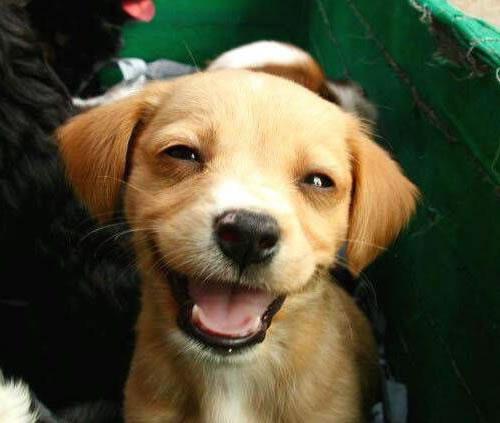 Un câine din Bucureşti a ajuns de râsul celorlaţi câini după ce stăpânul său a încercat să-l transporte cu maşina!
