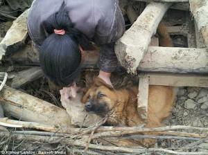 Un câine a supravieţuit 3 zile după cutremurul din China