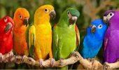 Papagalii sunt depresivi!