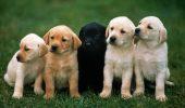Bucureștenii care nu-și declară câinii, amenzi de 3.000 de lei