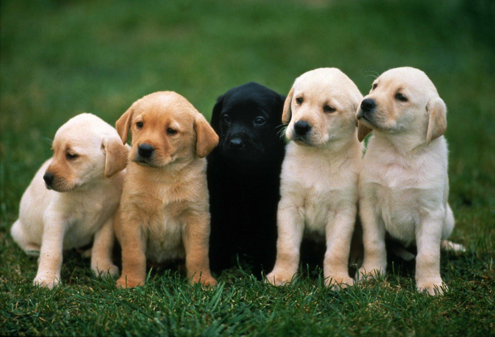 cute-dog-picture-ari-best-photo-stock-aeg