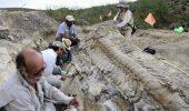 O coadă uriaşă de dinozaur, descoperită în Mexic, i-a uluit pe arheologi