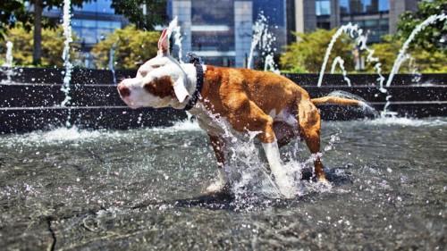 dog+hot+weather