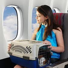 dog air