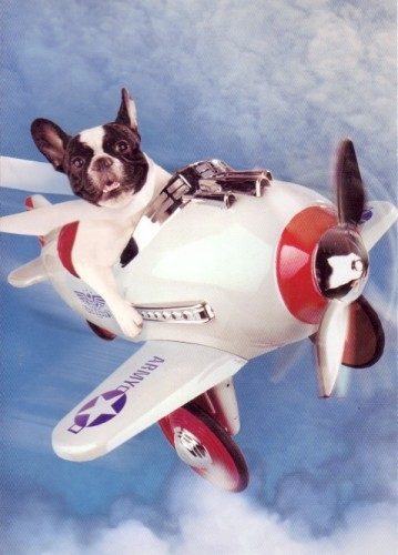 dog-flying-plane