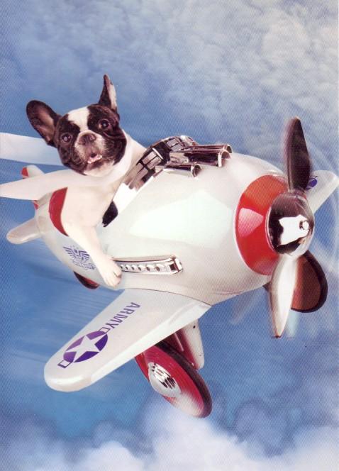 dog-flying-plane