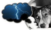 Câinelui tău îi este frică de furtună? Află de ce!