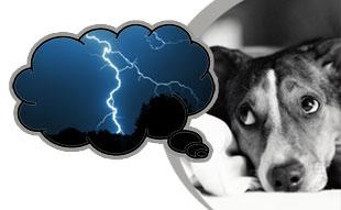 dog-storm-nightmare