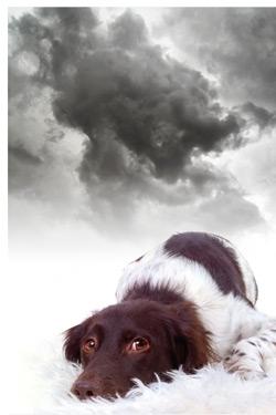 dogStorm