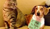 dogs-publically-shamed-funny-0-e1345655289438-1