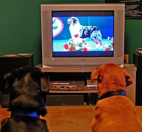 În SUA se va lansa o televiziune pentru căţei