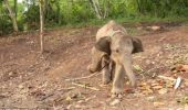 Soarta teribilă a unui pui de elefant ținut în lanțuri. IMAGINEA care te va bântui