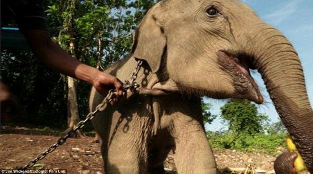 elefant_2_01