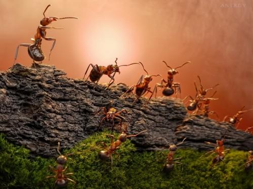 Furnicile pot anunţa cutremurele de pământ