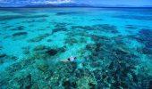 Marea Barieră de Corali în PERICOL. Soarta comorii subacvatice din Australia atârnă de un fir de aţă | GALERIE FOTO