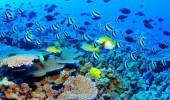 marea-bariera-de-corali-australia_01_thumb_630_380