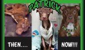 Și-a lăsat câinele să moară și acum riscă 18 luni în pușcărie!