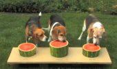 TOP 10 moduri HAIOASE de a mânca PEPENE! Cum reacţionează ANIMALELE când îl GUSTĂ | GALERIE FOTO / VIDEO