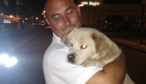 Povestea lui Paty, câinele pierdut care a ştiut cum să ceară ajutor