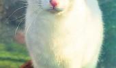 pisica 5