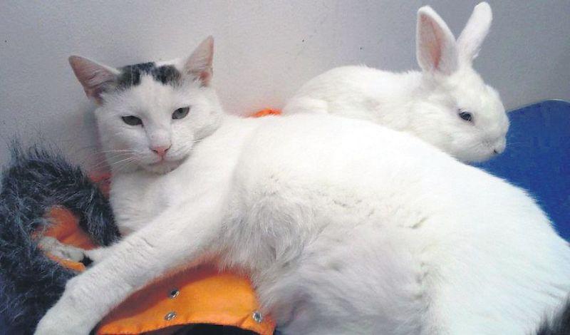 pisica 6